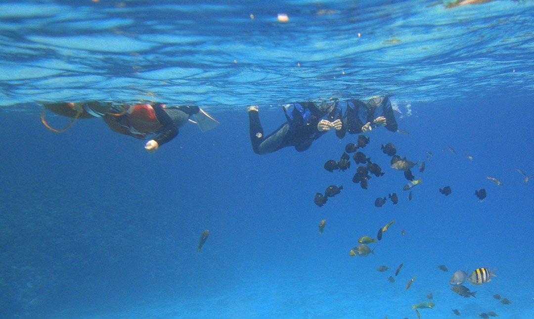 Ocean Style-迷人水納島浮潛半日遊(當日預約)