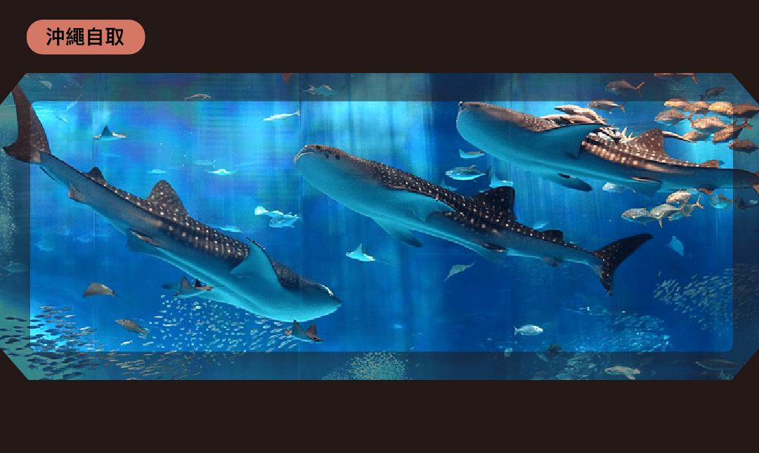 美麗海水族館-市場最低價 門票 1 張 沖繩取票