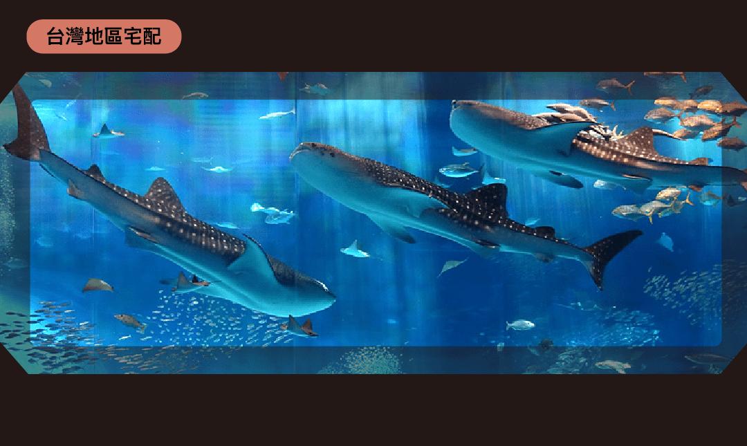 美麗海水族館-市場最低價 門票 1 張 宅配免運